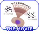 VCAC: Cellular Processes: Glycolysis - The Reactions